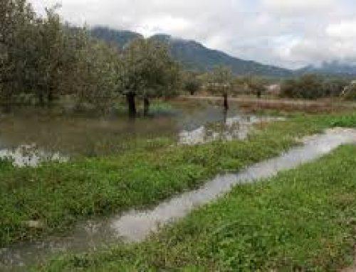 Τα ρέματα είναι υγρότοποι και όχι μόνο αγωγοί νερού.